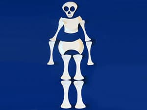Skelett ausschneiden