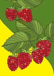 Malvorlagen Obst Basteln Gestalten