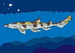 Malvorlage Katzenhai