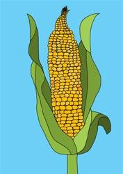 Malvorlagen - Gemüse