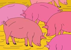 Malvorlage Schweine