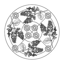 241998179948998497 also Feuer as well Mandalas Fruehling further Free Raspberry Coloring Pages Pictures in addition Ausmalbilder Baeume Blaetter Pflanzen. on winter