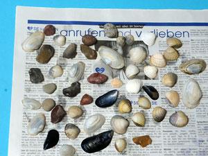 Basteln mit Muscheln und Steinen